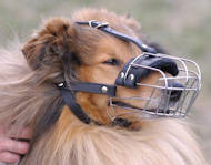 Wire Basket Dog Muzzle for Collie