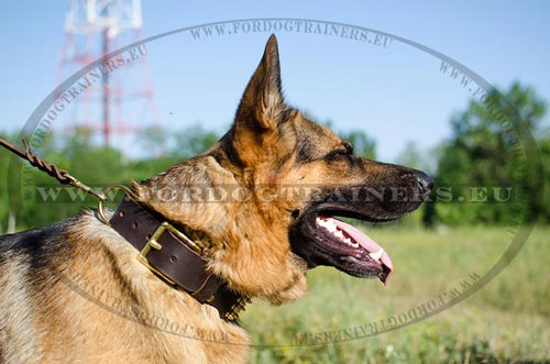 Genuine Leather Collar for GSD with Spikes