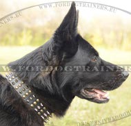 German Shepherd Leather Collar with Decorative Spikes and Studs