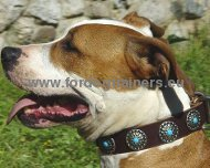 Collar for Amstaff with Blue Stones