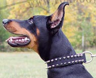 Collier riveté pour Dobermann | Collier en cuir solide ▼