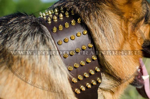 Gold-Like Dog Collar with Spikes