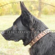 German Shepherd Studded Dog Collar ◆
