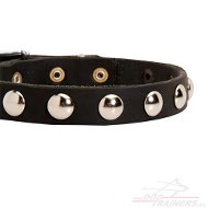 Exclusive Leather Collar with Decorative Rivets ★