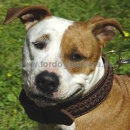 Handcrafted Special Braided Leather Dog Collar for Amstaff