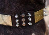 Pitbull Collar Exclusive with Spikes, Pyramids and Plates