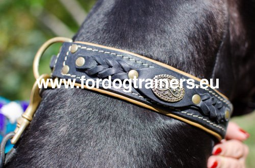 Collier pour Dogue allemand Ultra Classe