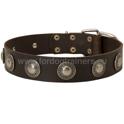 High-quality leather collar for Boxer