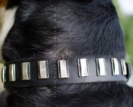 Luxury dog collar for deligthful walks ★
