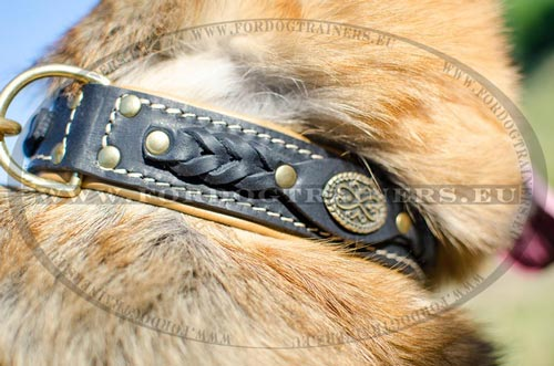 Comfortable dog collar best for stylish GSD