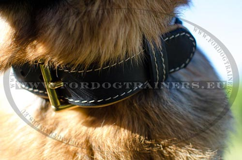 Fancy dog collar with nappa padding