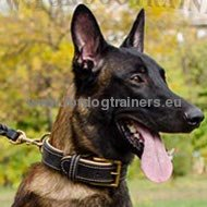 Leather Dog Collar, Classical with Nappa Padding!