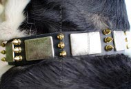 Leather Collar Design with Silver Plates and Bronze Spikes