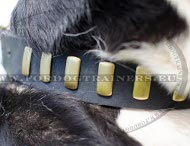 Leather Dog Collar Stylish, Studded Collar Exclusive