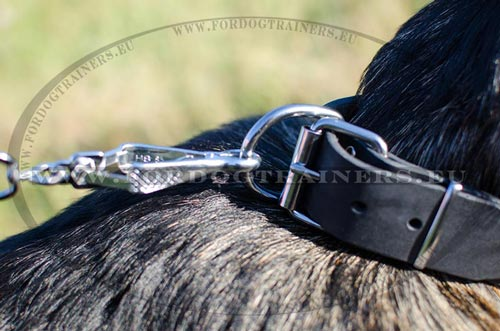 Leather collar for German Shepherd - dog product with reliable furniture