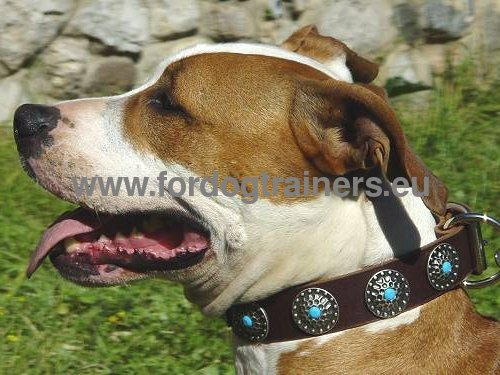 Gorgeous Leather Dog Collar with Stones