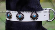 Doberman White Collar with Embossed Plates with Blue Stones