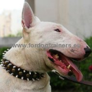 Bull Terrier Leather Spiked and Studded Collar 3 Rows S55