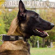 Pet Collar Vintage Style for Malinois ▓