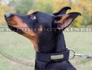 Doberman Nylon Collar Super Strong with ID Plate