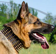 Spiked Exclusive Leather Collar for GSD extra large!