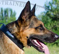 Identification Leather Collar for German Shepherd ✍