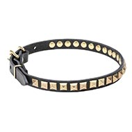Stunning Dog Collar for Dogs