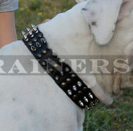 Pitbull Leather Dog Collar with Spikes and Studs ☘