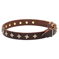 Star Studded Collar for Dogs