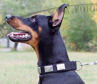 Nylon Collar Decorated with Plates for Dobermann