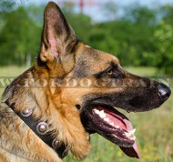 Designer Dog Collar of Nylon and with Silver Plates for GSD