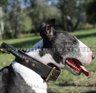 Leather Collar with Handle for Bull Terrier