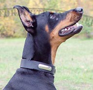 Personified Dog Collar Doberman Strong Leather