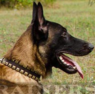 "Super Leather Collar ""Caterpillar"" for Malinois"