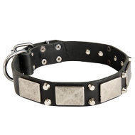 Decorated Dog Collar Wide, Leather Collar Exclusive