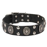Canine Collar Leather with Nickel-Plated Fittings