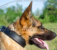 Padded Collar Classical Style for German Shepherd Wide