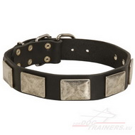 Leather Dog Collar With Nickel Plates, Elegant One!