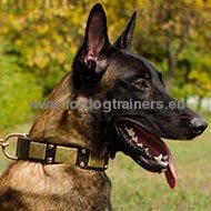 Designer Dog Collar Wide, Leather Collar Exclusive