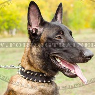 Dog Collar Nylon | Decorated with Beautiful Spikes