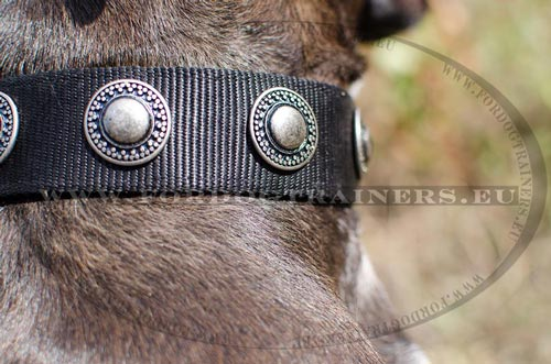 Exceptional nylon dog collar for Pitbull decorated