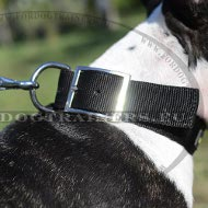 Collier synthétique pour Bull Terrier | Collier Top Résistance**