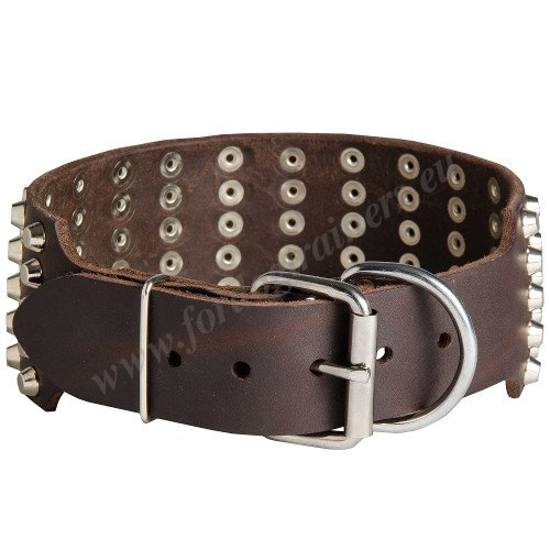 Studded Leather Collar for Dog