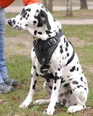 Dalmatian Protection/Attack Leather Dog Harness H1