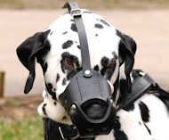 Everyday Leather dog muzzle for Dalmatian M51