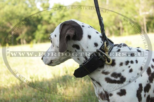 Genuine Leather Dog Lead for Medium Dog
