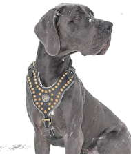 Decorated dog harness best for Great Dane