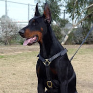 Doberman Luxury Handcrafted Leather Harness