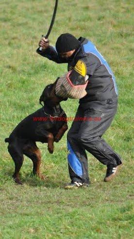 Faire Face au Chien Qui Mord : Dog harness, Dog muzzle