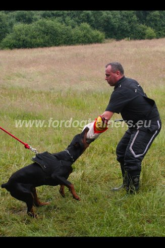 Dog Attack and Protection